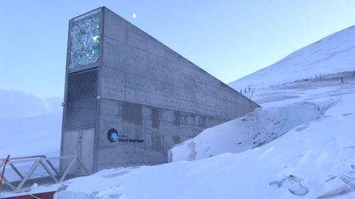 """Norvège : le """"grenier de la planète"""" fête ses 10 ans, près d'un million de graines conservées sous la glace"""