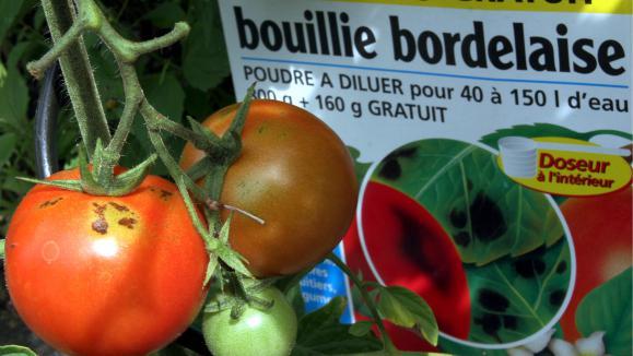 Jardin la bouillie bordelaise traitements pr ventifs de printemps - Traitement arbres fruitiers avec bouillie bordelaise ...
