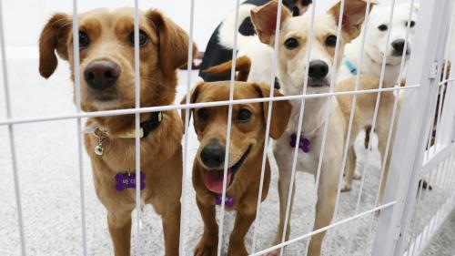 Près de 150 chiens vendus sur internet : un trafic international démantelé en Haute-Saône