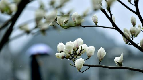 Pourquoi le printemps tombe cette année le 20 mars et non le 21 ?