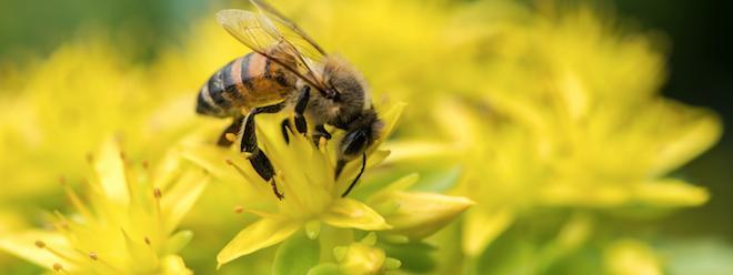 une femme d c de apr s s tre fait injecter du venin d abeille. Black Bedroom Furniture Sets. Home Design Ideas