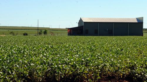 Vingt enseignes françaises pointées du doigt pour les importations de soja