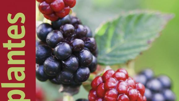 guide plantes sauvages comestibles pdf