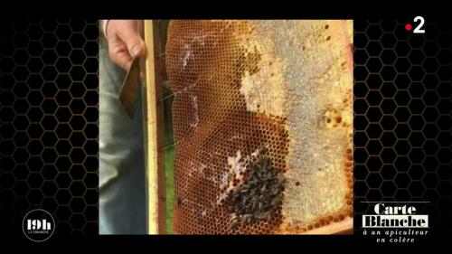 """VIDEO. """"Tout est contaminé par ces merdes-là !"""" : le cri de colère d'un apiculteur amateur du Finistère"""