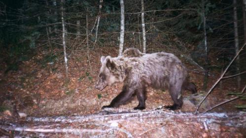 """RECIT. """"On n'a pas tué d'homme, juste un ours"""": quatorze ans après, la mort de Cannelle hante toujours la vallée d'Aspe"""