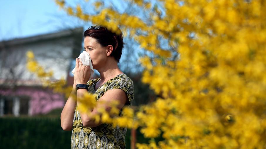video si vous tes allergique au pollen vous allez tre sensible ces conseils. Black Bedroom Furniture Sets. Home Design Ideas