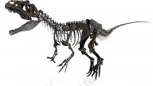 Ce dinosaure est à vendre (avec le droit de baptiser son espèce)