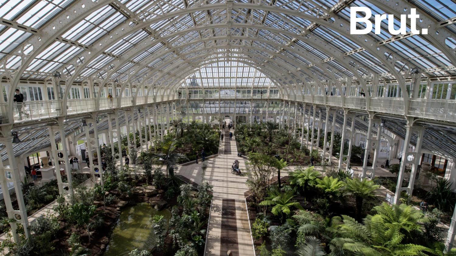 video entrez dans les coulisses de la temperate house la. Black Bedroom Furniture Sets. Home Design Ideas