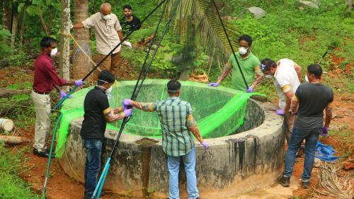 En Inde, le virus Nipah transporté par la chauve-souris a fait au moins dix morts en deux semaines