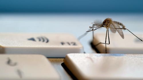 Des ultrasons sur YouTube pour faire fuir les moustiques : solution miracle ou imposture ?
