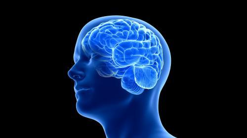 Le cerveau de l'homme a grossi à cause des conditions environnementales