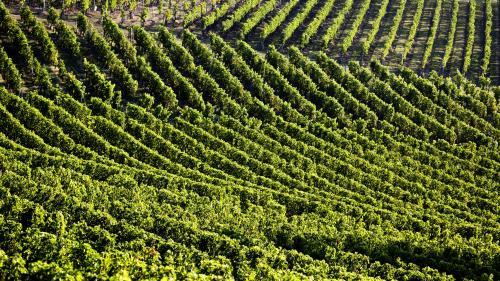 Les vignobles de Bordeaux et de Cognac durement touchés par la grêle
