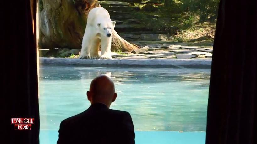 video passer la nuit en t te t te avec un ours polaire au zoo de la fl che. Black Bedroom Furniture Sets. Home Design Ideas