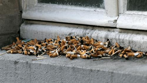 Le billet vert. Mégots et crottes de chiens s'invitent dans les municipales