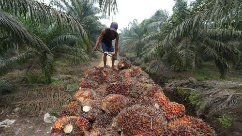 VIDEO. Dis franceinfo, c'est quoi le problème avec l'huile de palme ?