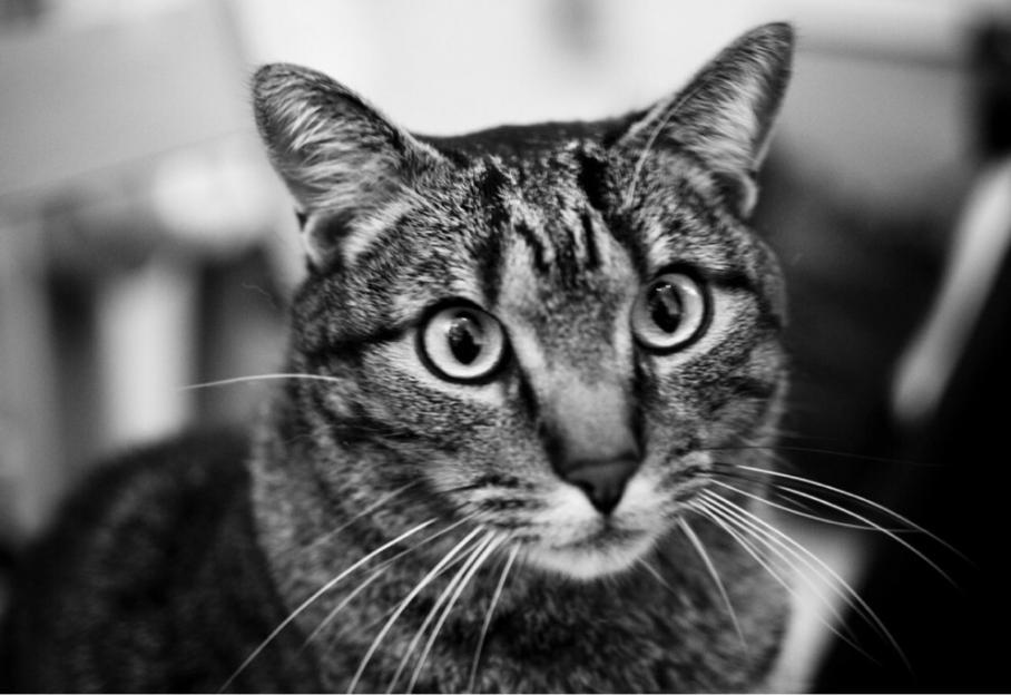 Tori noir HD chatte