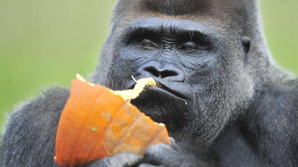 Parc animalier : un zoo sans cages et sans clôtures appelé la vallée des singes