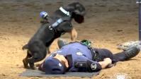 Eurozapping : le siège d'un journal attaqué aux Pays-Bas, un chien secouriste star en Espagne