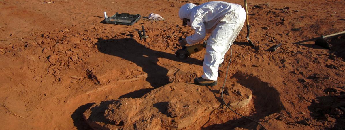 Une équipe de chercheurs a retrouvé en Argentine les restes d\'une espèce de dinosaure géant qui a vécu sur Terre il y a plus de 200 millions d\'années, le 9 juillet 2018.