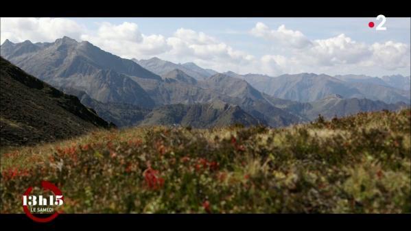 VIDEO. Ariège : l'omerta des montagnes protègerait-elle des chasseurs d'ours ?