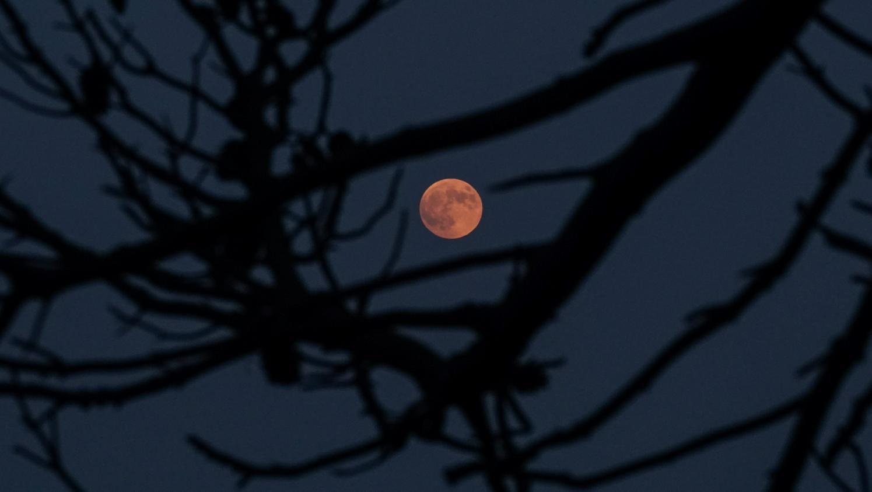 Éclipse de Lune : un spectacle magique