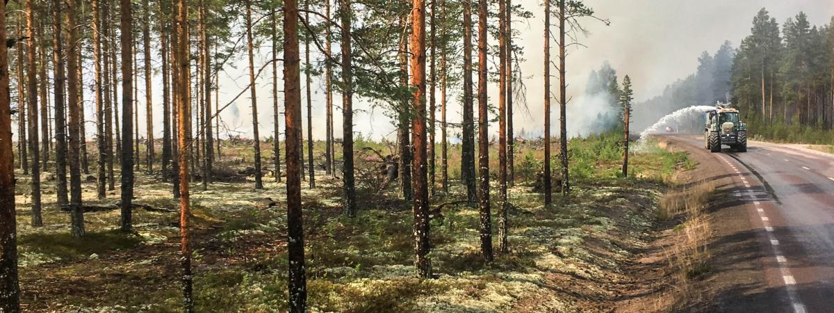 La forêt de Ljusdal en Suède, le 25 juillet 2018.