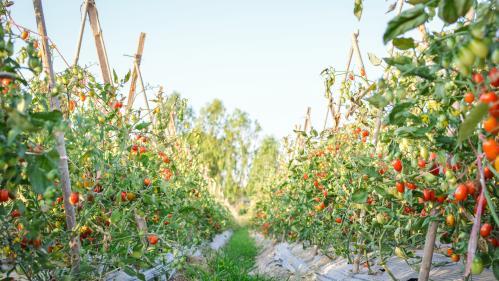 Agriculture : une cagnotte après les intempéries