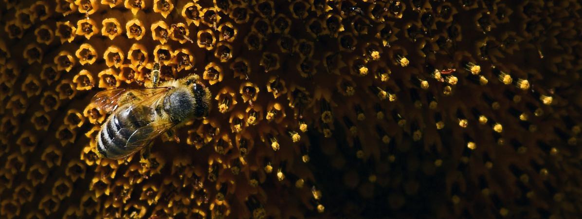 Une aide de 3 millions d'euros débloquée pour les apiculteurs 15532199