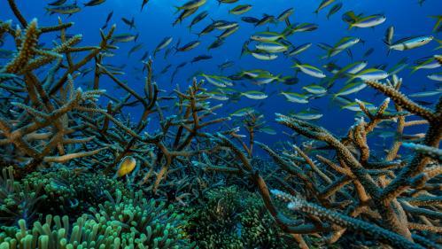 Le gouvernement veut préserver les récifs coralliens des produits chimiques