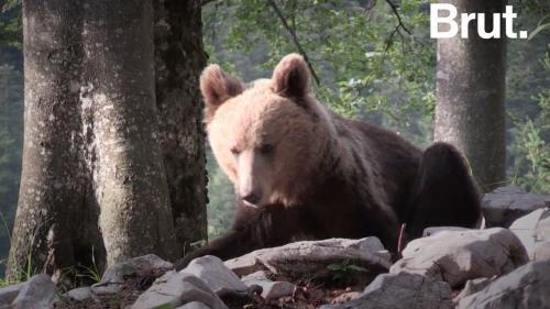 VIDEO. La Slovénie, un endroit de cohabitation entre l'homme et l'ours Nouvel Ordre Mondial, Nouvel Ordre Mondial Actualit�, Nouvel Ordre Mondial illuminati