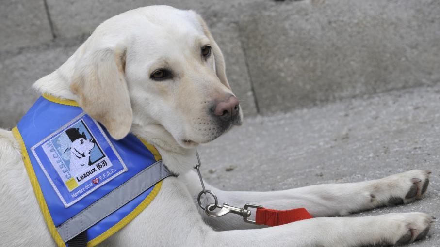 Un chien guide d'aveugles et ses propriétaires refoulés d