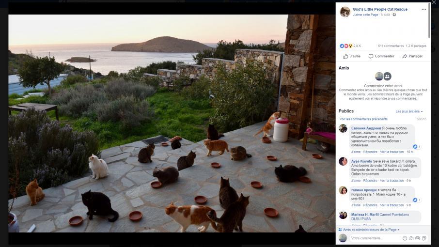 Vivre avec plus de 50 chats sur une le paradisiaque l - Offre d emploi femme de chambre ile de france ...