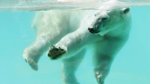 Zoo d'Amnéville: l'ours blanc Olaf est mort de vieillesse à 31 ans https://www.bfmtv.com/animaux/zoo-d-amneville-l-ours-blanc-olaf-est-mort-de-vieillesse-a-31-ans-1506913.html…