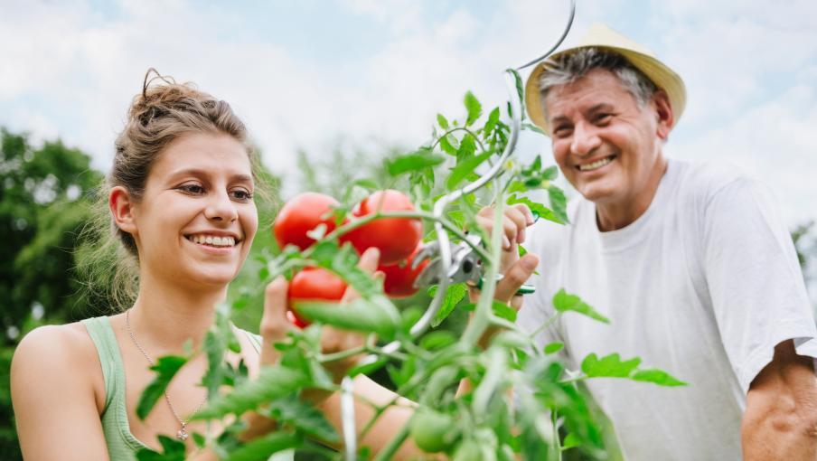 jardin du dimanche faire ses graines de tomates. Black Bedroom Furniture Sets. Home Design Ideas