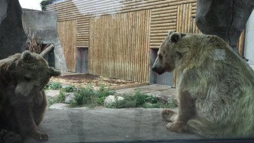 Après le coup de gueule de Rémi Gaillard, l'ourse du film de Jean-Jacques Annaud va être transférée dans un zoo plus grand