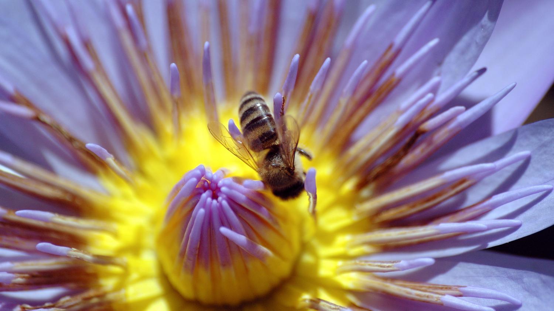 des salari s de yoplait s ment des fleurs pour sauver les abeilles. Black Bedroom Furniture Sets. Home Design Ideas