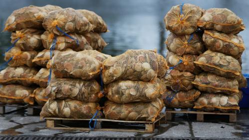 Saint-Jacques : les coquilles ont aussi leur label