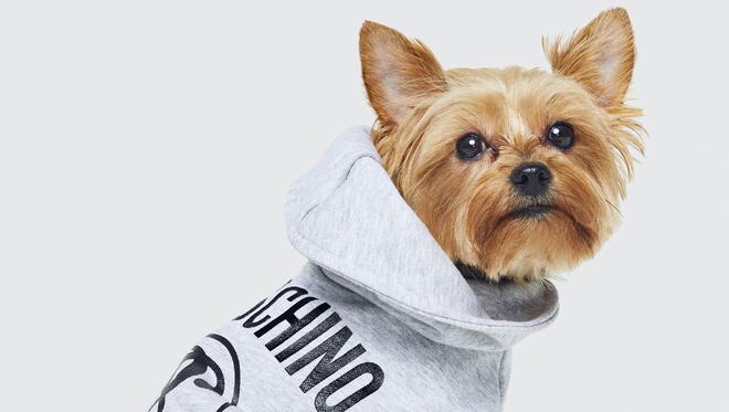 la marque h m va vendre des v tements pour chiens. Black Bedroom Furniture Sets. Home Design Ideas