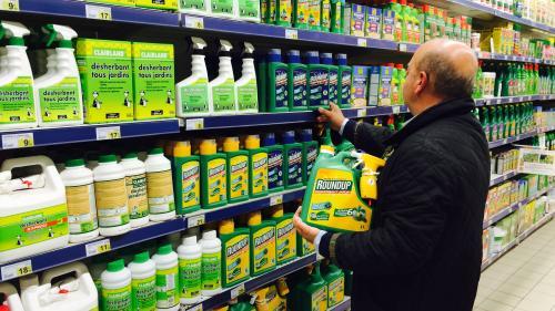 """""""Nous voulons des coquelicots"""" : une centaine de personnalités réclament l'interdiction des pesticides de synthèse en France"""