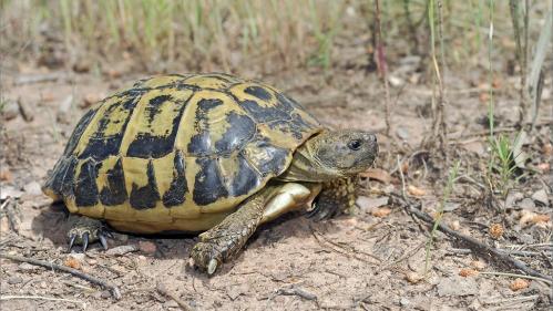 87 tortues protégées saisies dans un appartement d'Arles