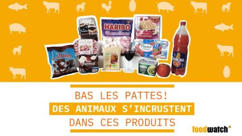 """Yaourt à la gélatine de bœuf, glace à la résine d'insectes... Une ONG dénonce les """"animaux cachés"""" dans certains aliments"""