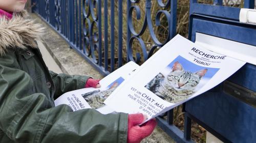 Gare aux escrocs de tout poil sur le réseau de recherche d'animaux perdus Pet Alert