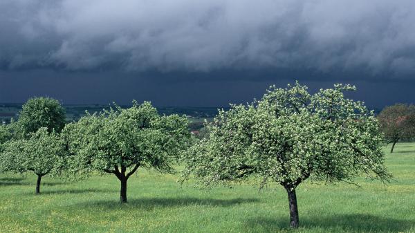 Météo : cinq départements du nord-est de la France placés en vigilance orange aux vents violents