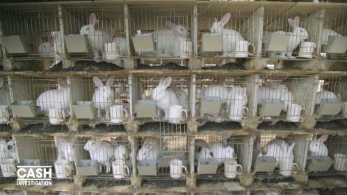 """VIDEO. """"Cash Investigation"""" a remonté une filière de la fourrure en Chine et filmé les élevages de la honte Nouvel Ordre Mondial, Nouvel Ordre Mondial Actualit�, Nouvel Ordre Mondial illuminati"""