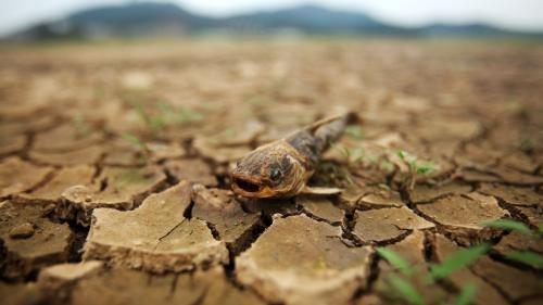 Climat : cinq questions sur la nouvelle alerte au réchauffement climatique lancée par le Giec