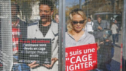 Pamela Anderson et Yannick Jadot se mettent en cage pour dénoncer les souffrances animales