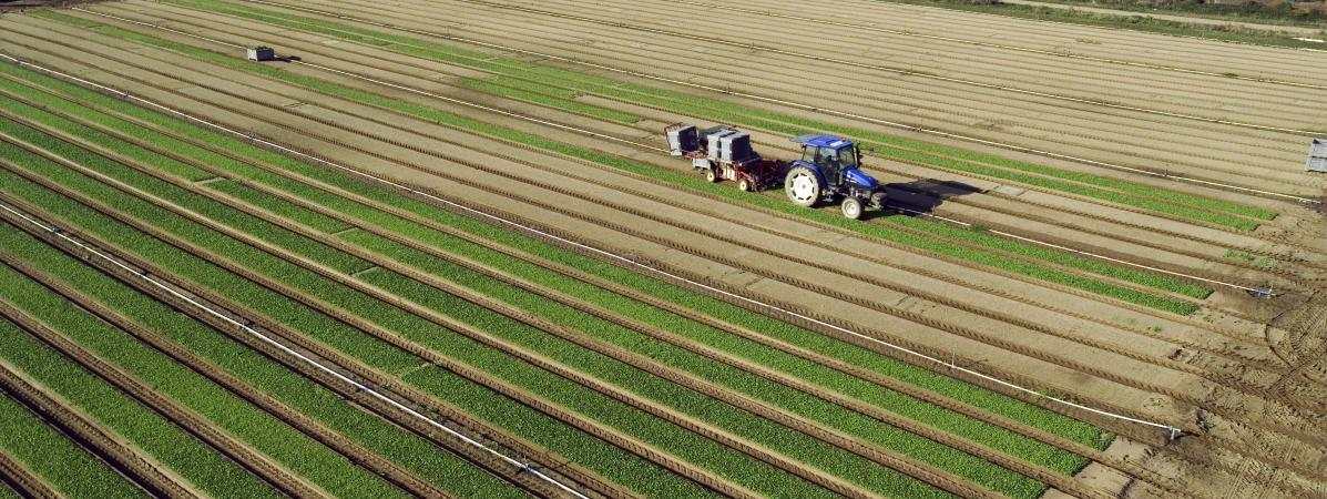 Une plantation de mâche, le 4 août 2005 à Machecoul (Loire-Atlantique).
