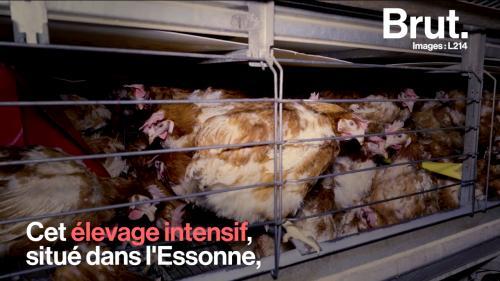 https://www.francetvinfo.fr/image/75j1537ow-6041/500/281/15998757.png