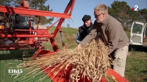 VIDEO. Le soutien de l'association Graines de Noé aux paysans qui cultivent de vieilles variétés de blé et de céréales
