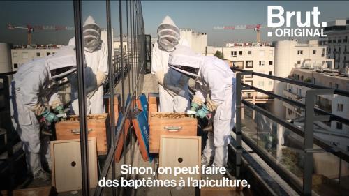 VIDEO. Sauver les abeilles grâce à votre entreprise ? C'est possible.